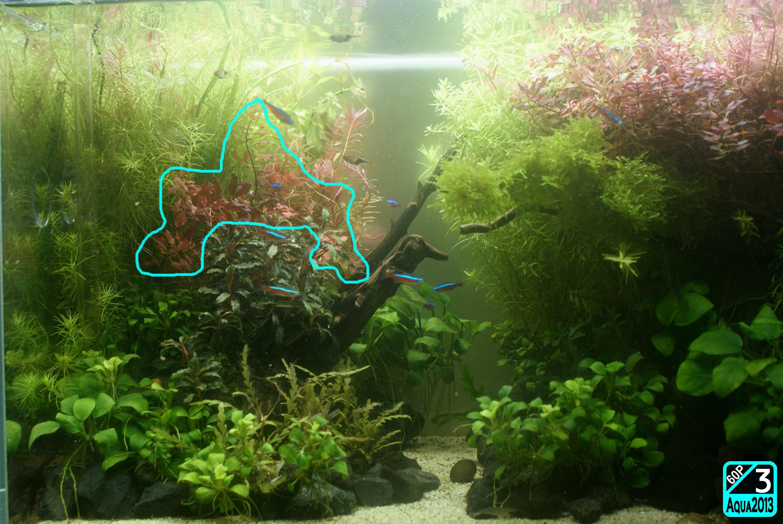 Aqua2016_0925c_006.jpg