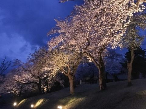 2016-04-14松ヶ峯桜1