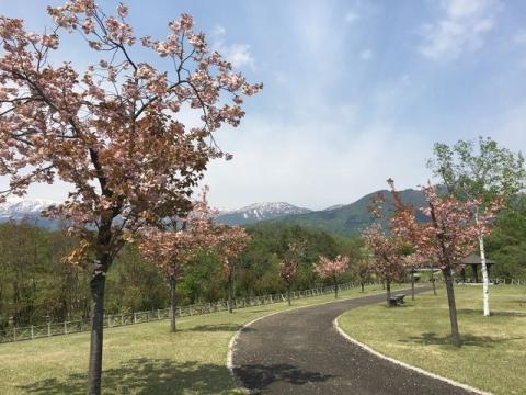 2016-04松山の桜