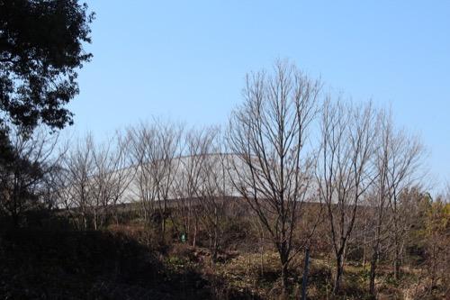 0089:牧野富太郎記念館 中間④