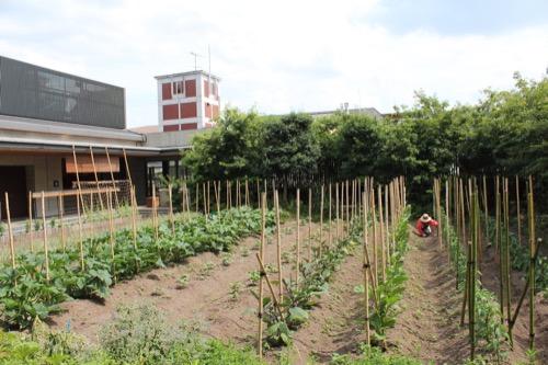 0122:京都八百一本館 屋上農園③