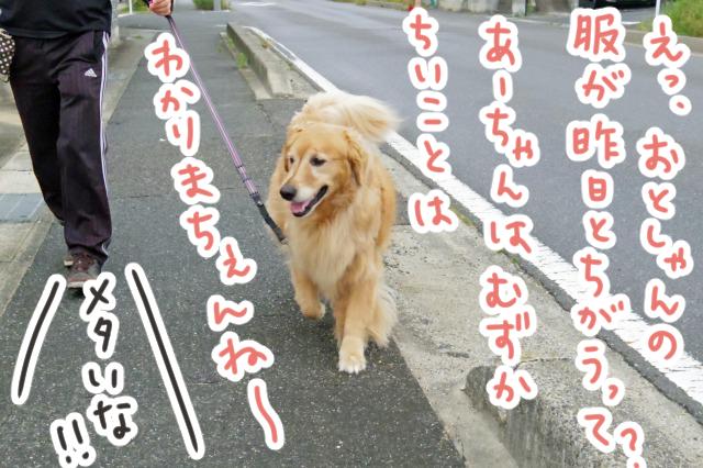 IMGP0655_edited-4.jpg