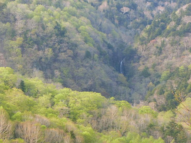 新緑の幕滝