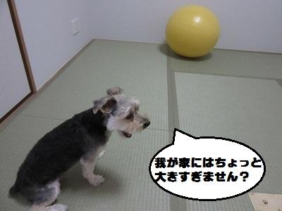 バランスボール5