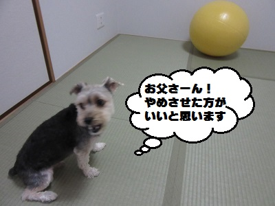 バランスボール3