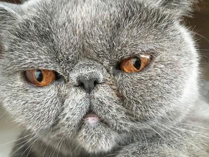 へいちゃんのアップはこんな顔。