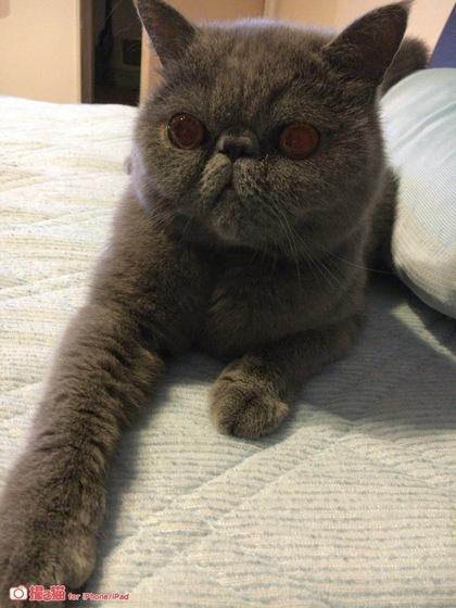 撮る猫アプリを使ってみた