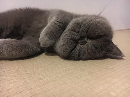 今日も疲れたニャ~