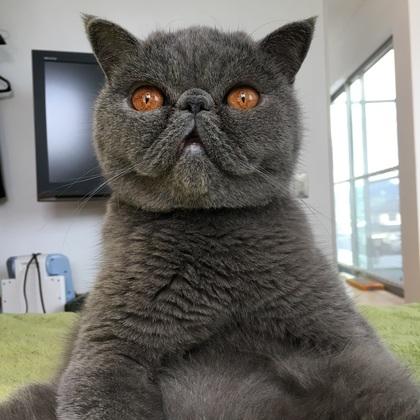 驚いてるおっさん猫