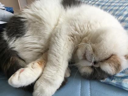 一緒に寝てる