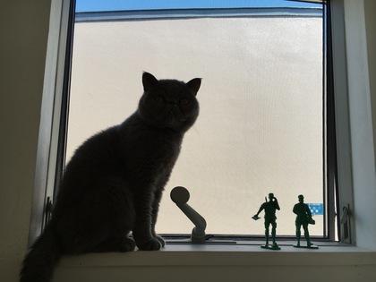 猫らしいお姿