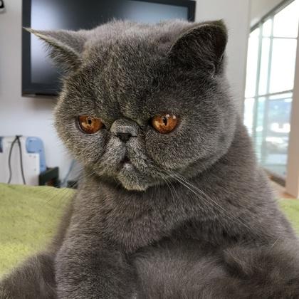 黄昏れるおっさん猫