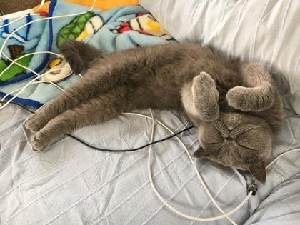 伸びながら寝る