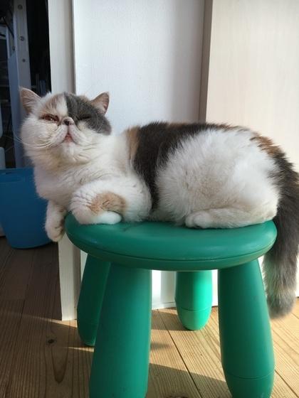 この椅子も居心地良し