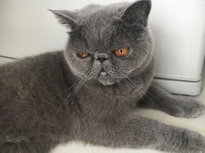 割と早めに食べ終わる猫