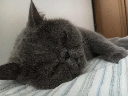 おかぁさんそろそろ起きない?