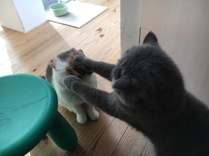 やめて!!