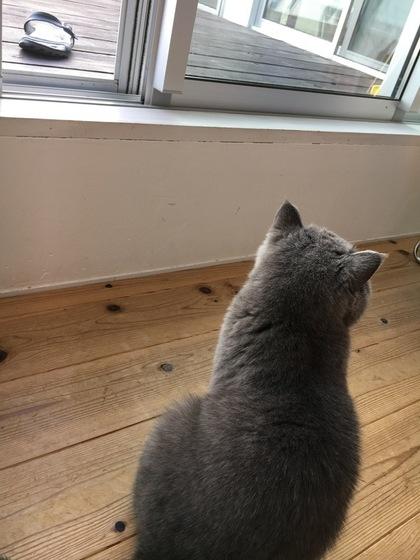 窓を開けてくれるのを待ってます