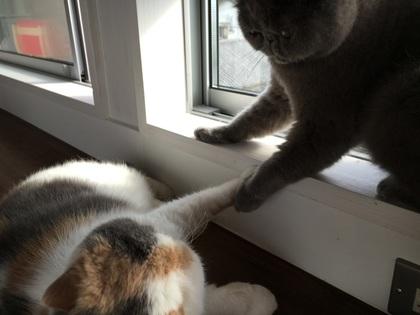 あら、握手なんかしちゃってカワイイ~!