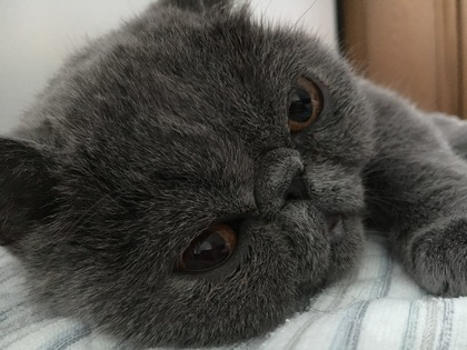 起きてニャ~ン!