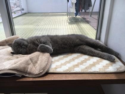 窓際で寝た