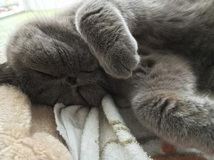 お化けのように手を上げて寝る