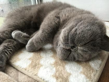 本気で寝るモード