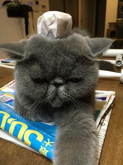 まんじゅうのせ猫