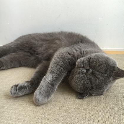 このごろ畳で落ちてることが多いニャ