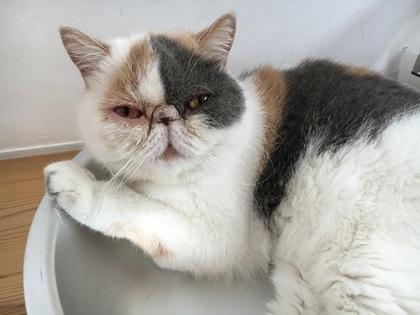 猫鍋でくつろぐ