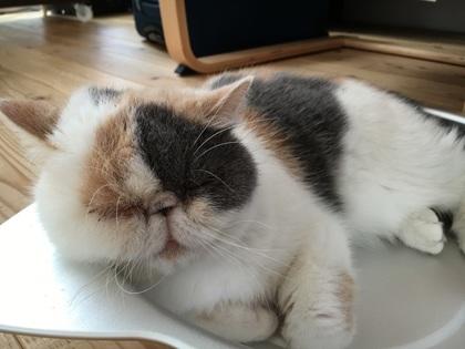 猫鍋は涼しいニャ