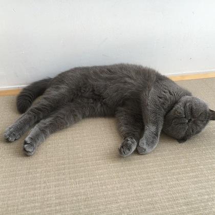 畳に落ちてるへいちゃん
