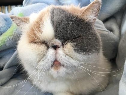 眠いんだよね