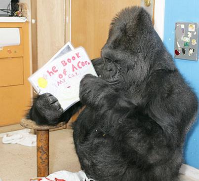 猫の本を読む