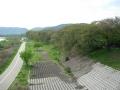 160416すっかり桜も終わった背割堤