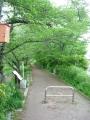 160423いつもの静かな井手の玉川遊歩道