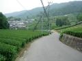 160528石寺の茶畑を行く