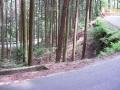160604谷山林道ピークから炭山へ下る