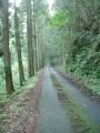 160611ほの暗い林道を上る