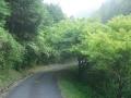 160611横川林道を童仙房に向かって上る