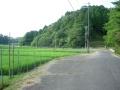 160730野殿へののんびりした田圃道