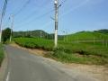 160811和束白栖の茶畑を抜けて裏大正池へ