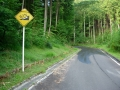 160814多羅尾林道を三国越方面へ上る