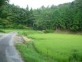 160814童仙房北側の林道を行く