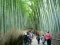 161103竹林を上って行く
