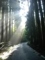 161112逢坂峠へ西側から木立の中を上る