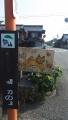 160618米原磯漁港ねこ注意の看板.2