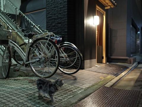 akisugita15.jpg