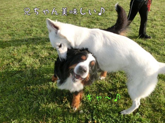 CIMG4278_20160419143825fb8.jpg