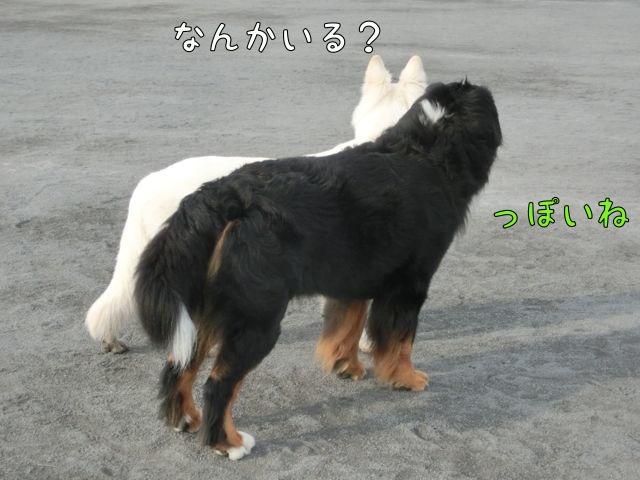 CIMG4519.jpg